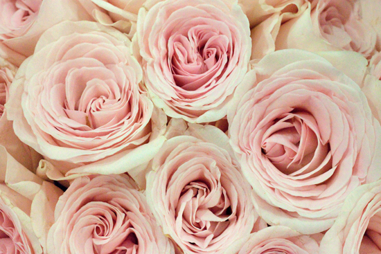 New-Covent-Garden-Flower-Market-July-Market-Report-Flowerona-14.jpg?mtime=20170913122245#asset:10153