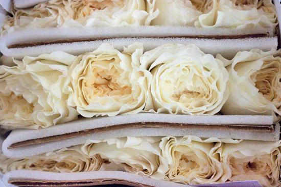 New-Covent-Garden-Flower-Market-July-Market-Report-Flowerona-15.jpg?mtime=20170913122245#asset:10154