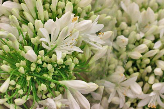 New-Covent-Garden-Flower-Market-July-Market-Report-Flowerona-17.jpg?mtime=20170913122246#asset:10156