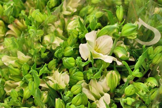 New-Covent-Garden-Flower-Market-July-Market-Report-Flowerona-18.jpg?mtime=20170913122247#asset:10157