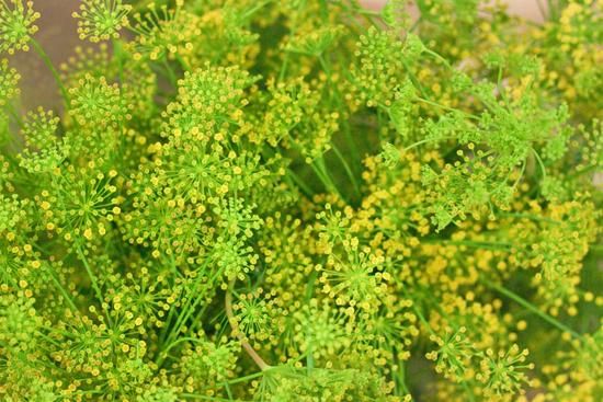 New-Covent-Garden-Flower-Market-July-Market-Report-Flowerona-19.jpg?mtime=20170913122247#asset:10158