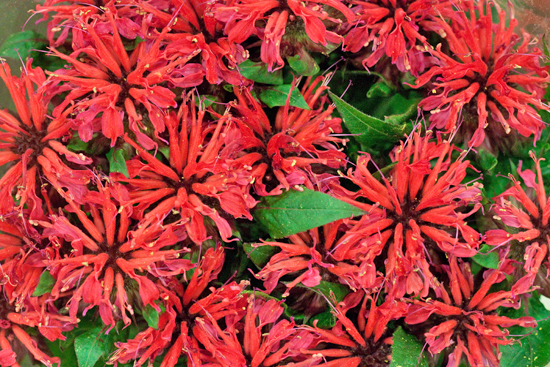 New-Covent-Garden-Flower-Market-July-Market-Report-Flowerona-23.jpg?mtime=20170913122250#asset:10162