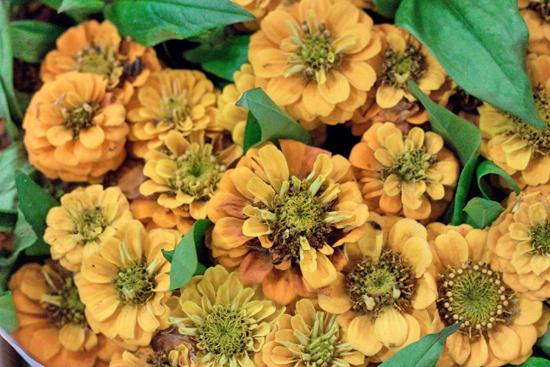 New-Covent-Garden-Flower-Market-July-Market-Report-Flowerona-24.jpg?mtime=20170913122251#asset:10163