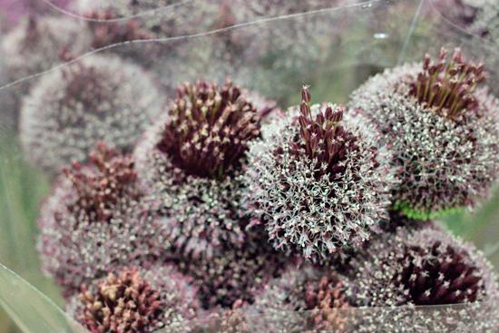 New-Covent-Garden-Flower-Market-July-Market-Report-Flowerona-25.jpg?mtime=20170913122251#asset:10164