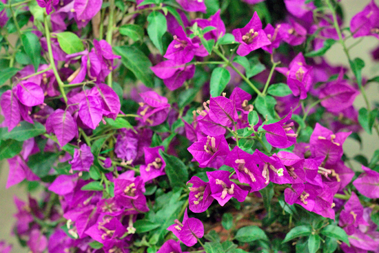 New-Covent-Garden-Flower-Market-July-Market-Report-Flowerona-29.jpg?mtime=20170913122253#asset:10168
