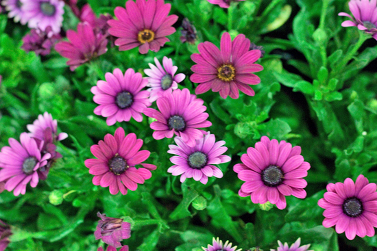 New-Covent-Garden-Flower-Market-July-Market-Report-Flowerona-30.jpg?mtime=20170913122254#asset:10169