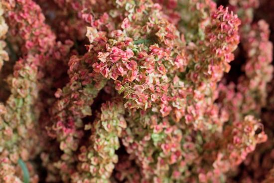 New-Covent-Garden-Flower-Market-July-Market-Report-Flowerona-34.jpg?mtime=20170913122425#asset:10173
