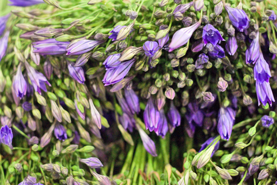 New-Covent-Garden-Flower-Market-July-Market-Report-Flowerona-6.jpg?mtime=20170913122423#asset:10145