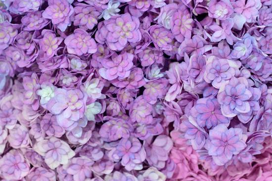 New-Covent-Garden-Flower-Market-July-Market-Report-Flowerona-9.jpg?mtime=20170913122242#asset:10148