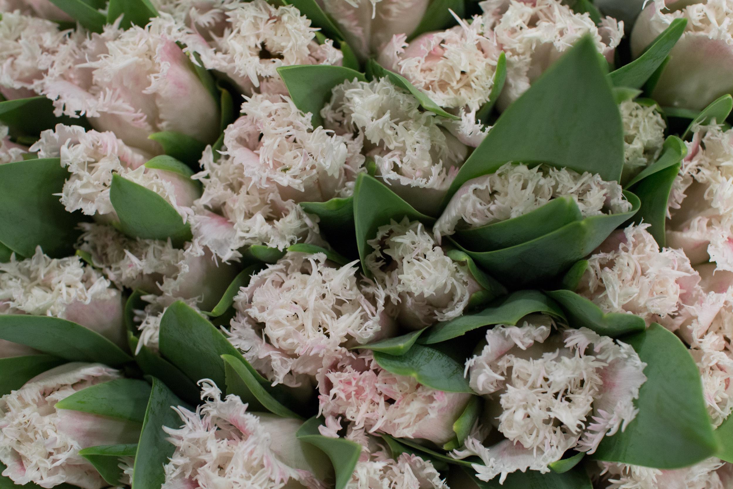 New Covent Garden Flower Market March 2016 Market Report Flowerona Hr 1