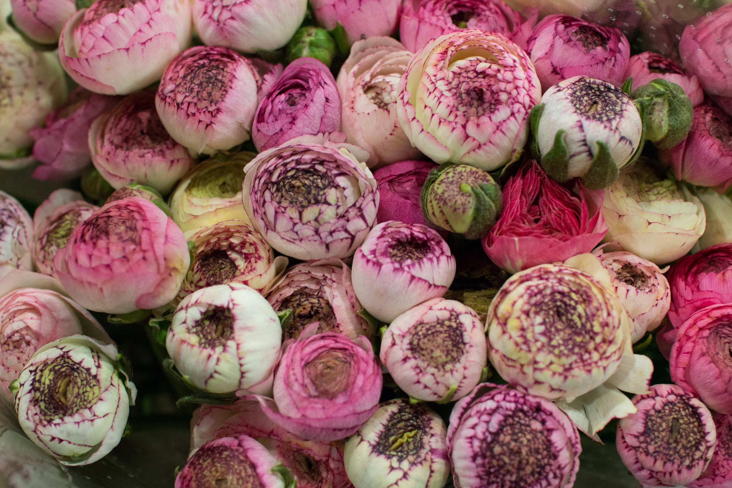 New Covent Garden Flower Market March 2016 Market Report Flowerona Hr 12