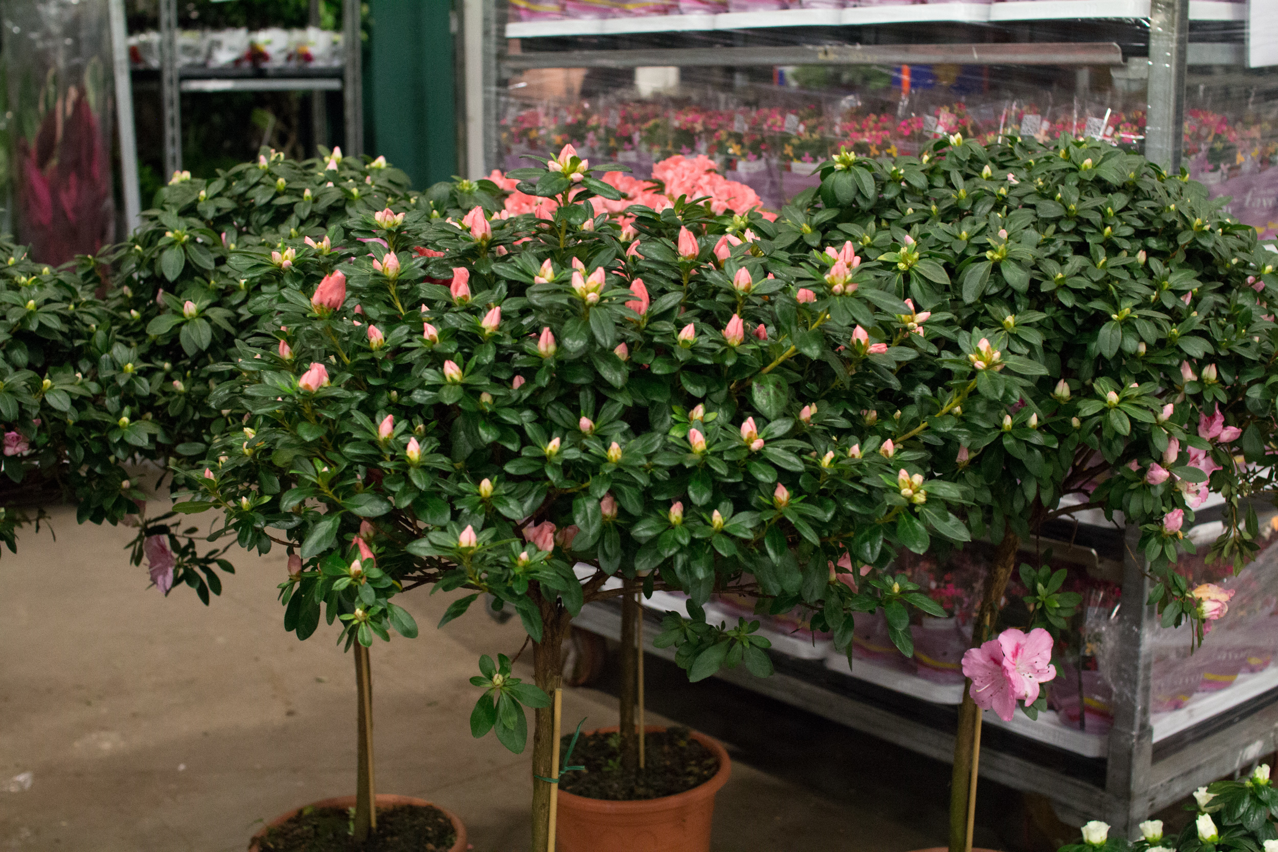 New Covent Garden Flower Market March 2016 Market Report Flowerona Hr 26