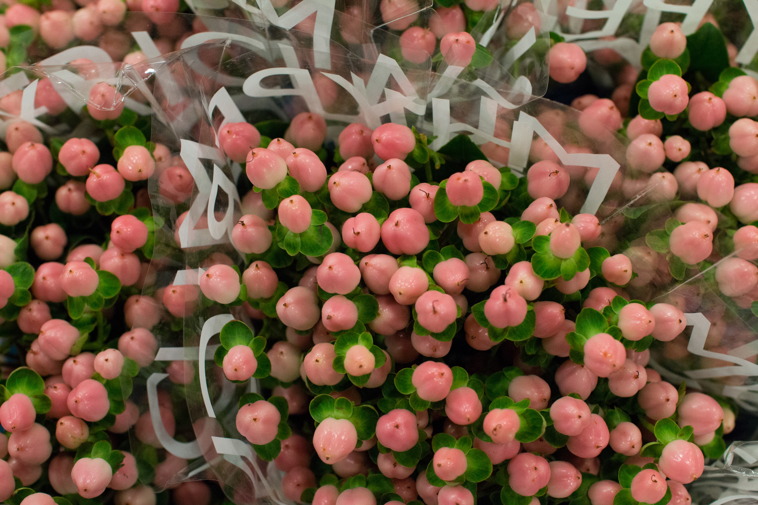 New Covent Garden Flower Market March 2016 Market Report Flowerona Hr 5