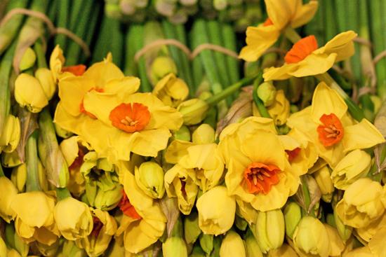 New-Covent-Garden-Flower-Market-March-Market-Report-Flowerona-1.jpg?mtime=20170913161841#asset:10376