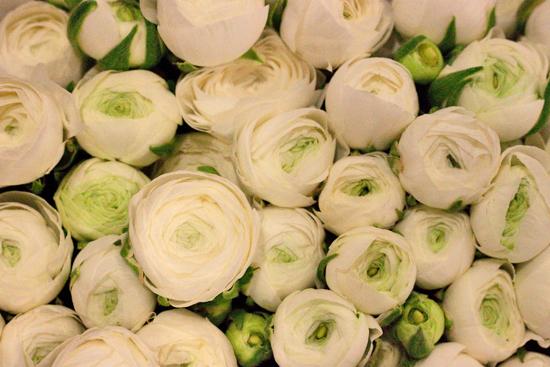 New-Covent-Garden-Flower-Market-March-Market-Report-Flowerona-10.jpg?mtime=20170913161825#asset:10357