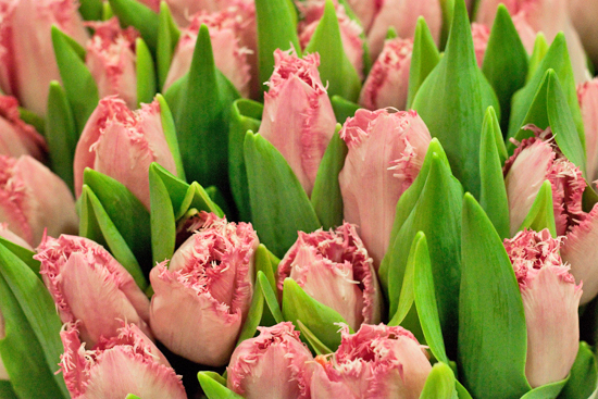 New-Covent-Garden-Flower-Market-March-Market-Report-Flowerona-12.jpg?mtime=20170913161826#asset:10359