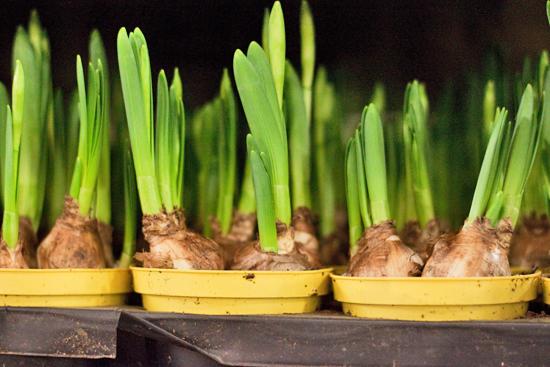 New-Covent-Garden-Flower-Market-March-Market-Report-Flowerona-19.jpg?mtime=20170913161830#asset:10366