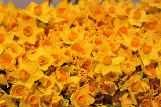 New-Covent-Garden-Flower-Market-March-Market-Report-Flowerona-2.jpg?mtime=20170913161841#asset:10377