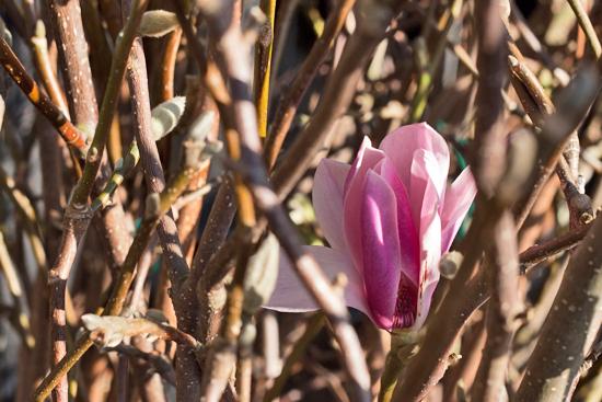 New-Covent-Garden-Flower-Market-March-Market-Report-Flowerona-29.jpg?mtime=20170913161846#asset:10386