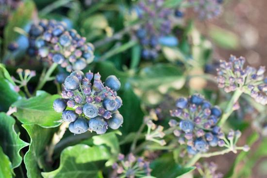 New-Covent-Garden-Flower-Market-March-Market-Report-Flowerona-30.jpg?mtime=20170913161847#asset:10387