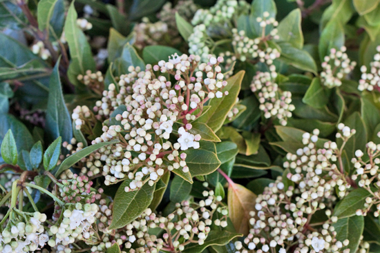 New-Covent-Garden-Flower-Market-March-Market-Report-Flowerona-32.jpg?mtime=20170913161848#asset:10389