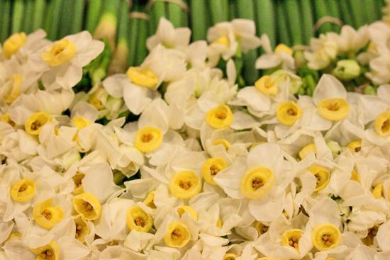 New-Covent-Garden-Flower-Market-March-Market-Report-Flowerona-4.jpg?mtime=20170913161842#asset:10379