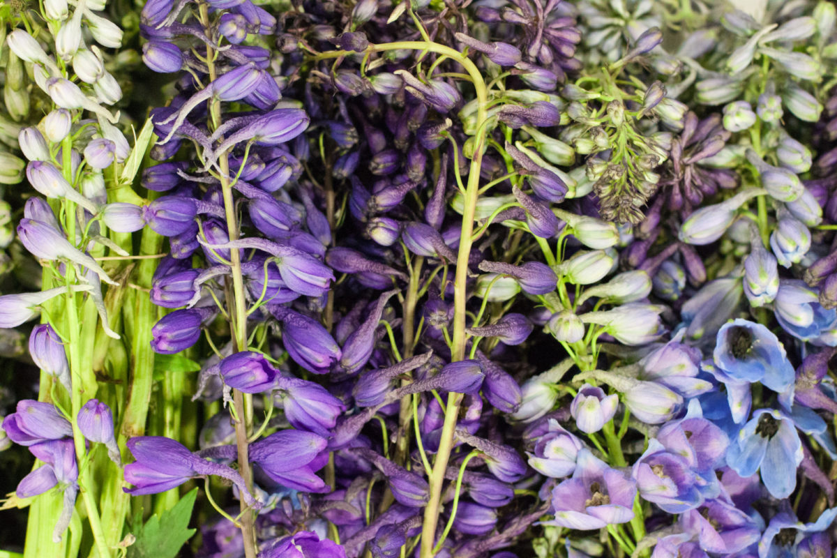 New Covent Garden Flower Market July 2015 Market Report Flowerona Hr 1