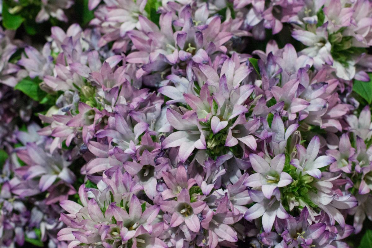 New Covent Garden Flower Market July 2015 Market Report Flowerona Hr 15