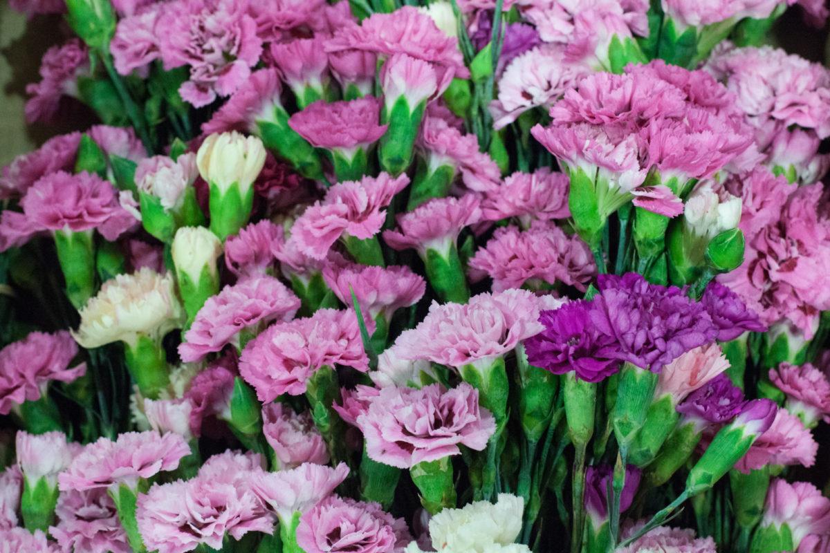 New Covent Garden Flower Market July 2015 Market Report Flowerona Hr 2