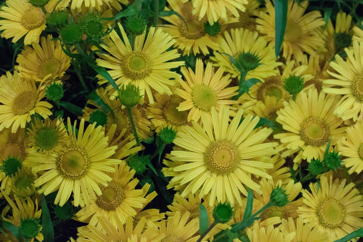 New Covent Garden Flower Market July 2015 Market Report Flowerona Hr 6