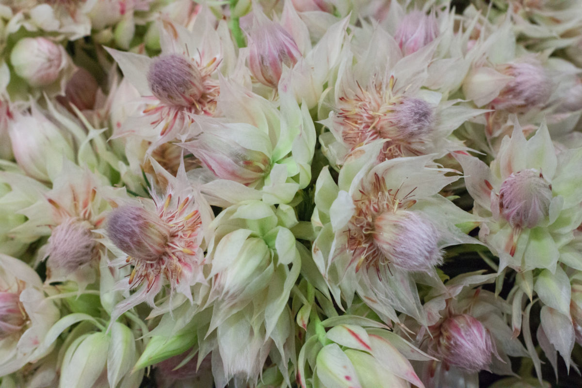 New Covent Garden Flower Market July 2015 Market Report Flowerona Hr 9