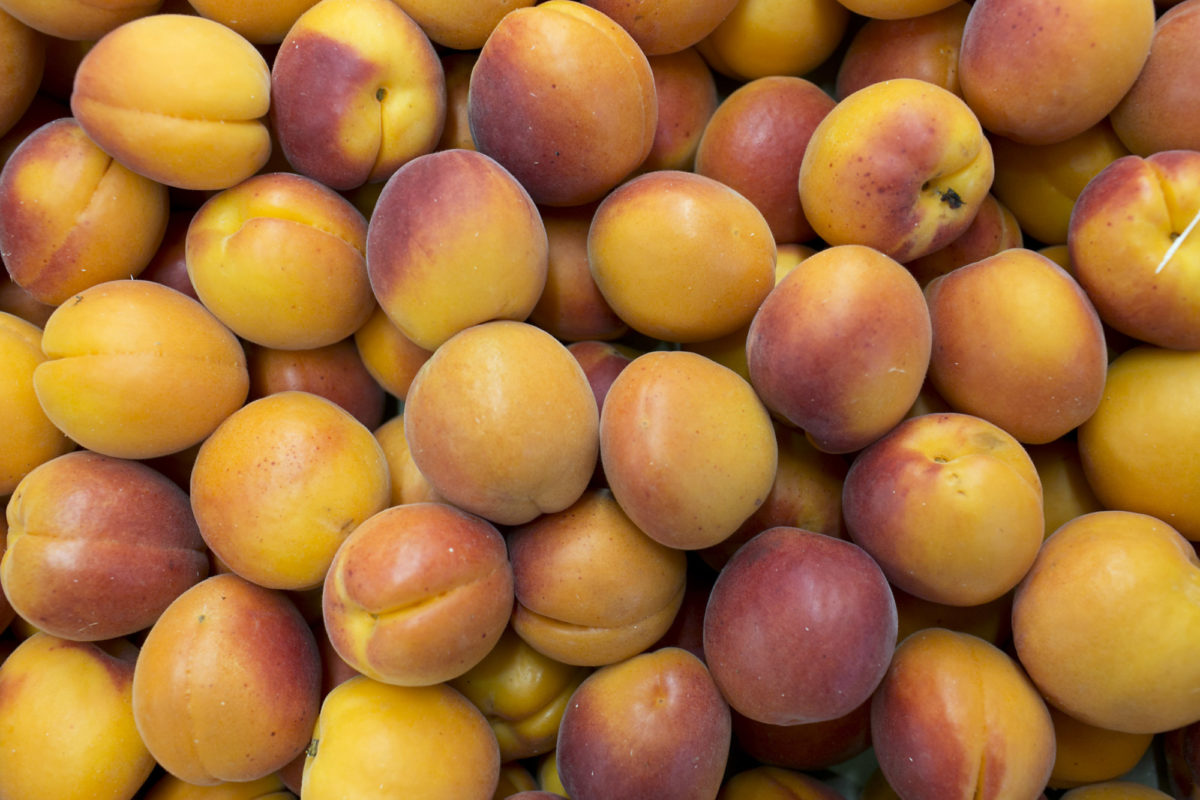 Fruit And Vegetable Market Report August 2015 Apricots