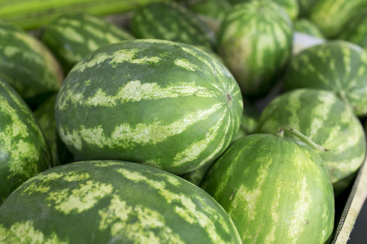 Fruit And Vegetable Market Report August 2015 Watermelon