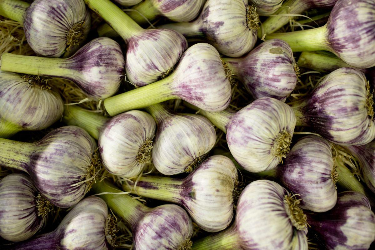 Fruit And Vegetable Market Report June 2016 Rose Garlic