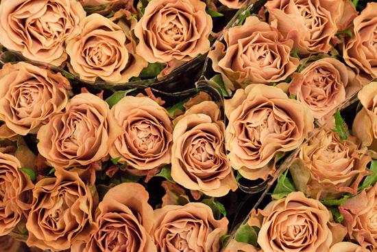 New-Covent-Garden-Flower-Market-November-Flowerona-10.jpg?mtime=20170928144551#asset:11924