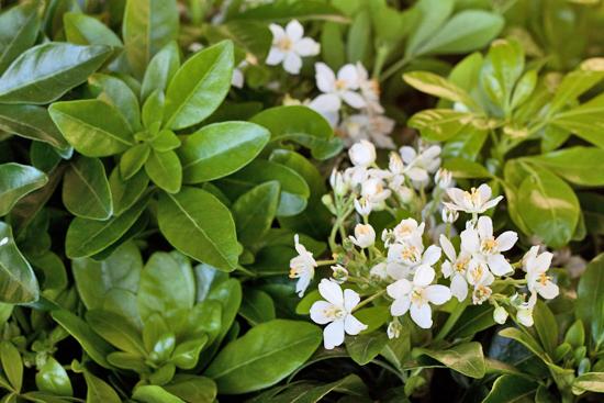 New-Covent-Garden-Flower-Market-November-Flowerona-13.jpg?mtime=20170928144554#asset:11927