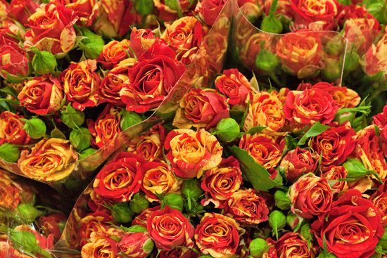 New-Covent-Garden-Flower-Market-November-Flowerona-7.jpg?mtime=20170928144549#asset:11921