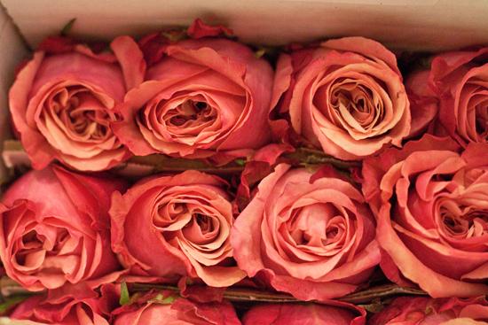 New-Covent-Garden-Flower-Market-November-Flowerona-9.jpg?mtime=20170928144551#asset:11923