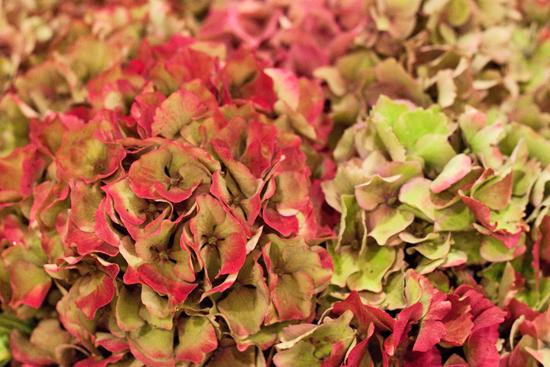 New-Covent-Garden-Flower-Market-Oct-2013-Flowerona-1.jpg?mtime=20170928151343#asset:11985