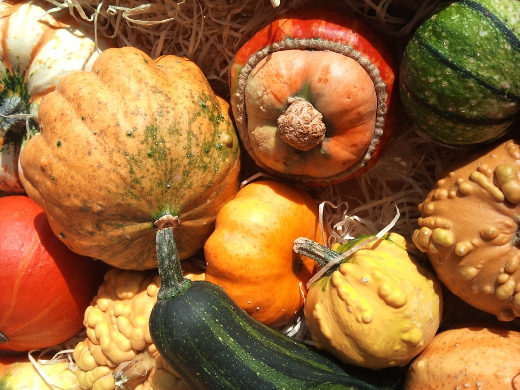 OCT-squash-mix.jpg?mtime=20171003171220#asset:12831