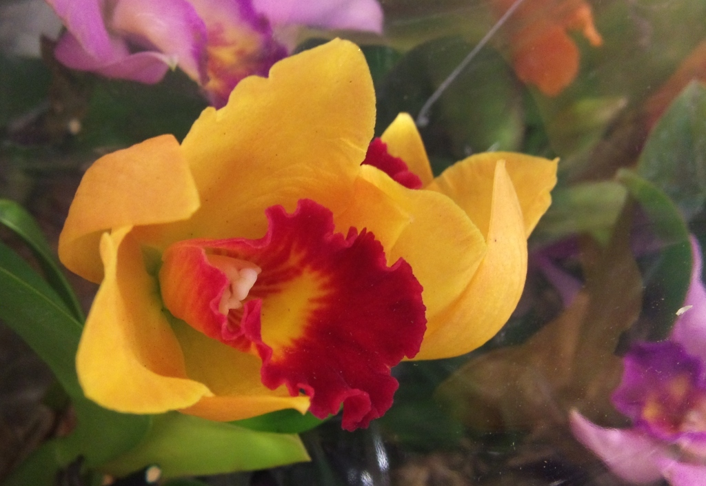 Quality-orchid.jpg?mtime=20171003165114#asset:12773