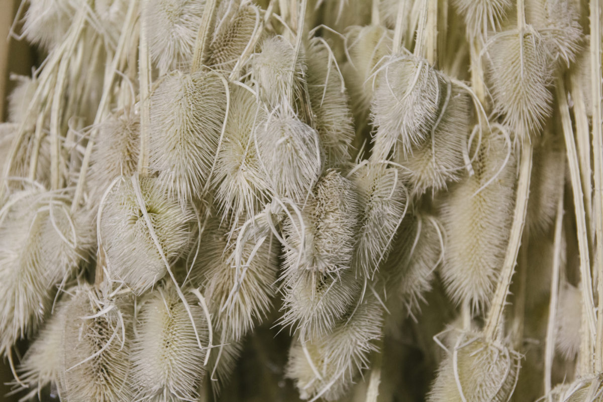 New Covent Garden Flower Market April 2019 A Florists Guide To Dried Flowers And Grasses Rona Wheeldon Flowerona Bleached Teasels At Porters Foliage 21