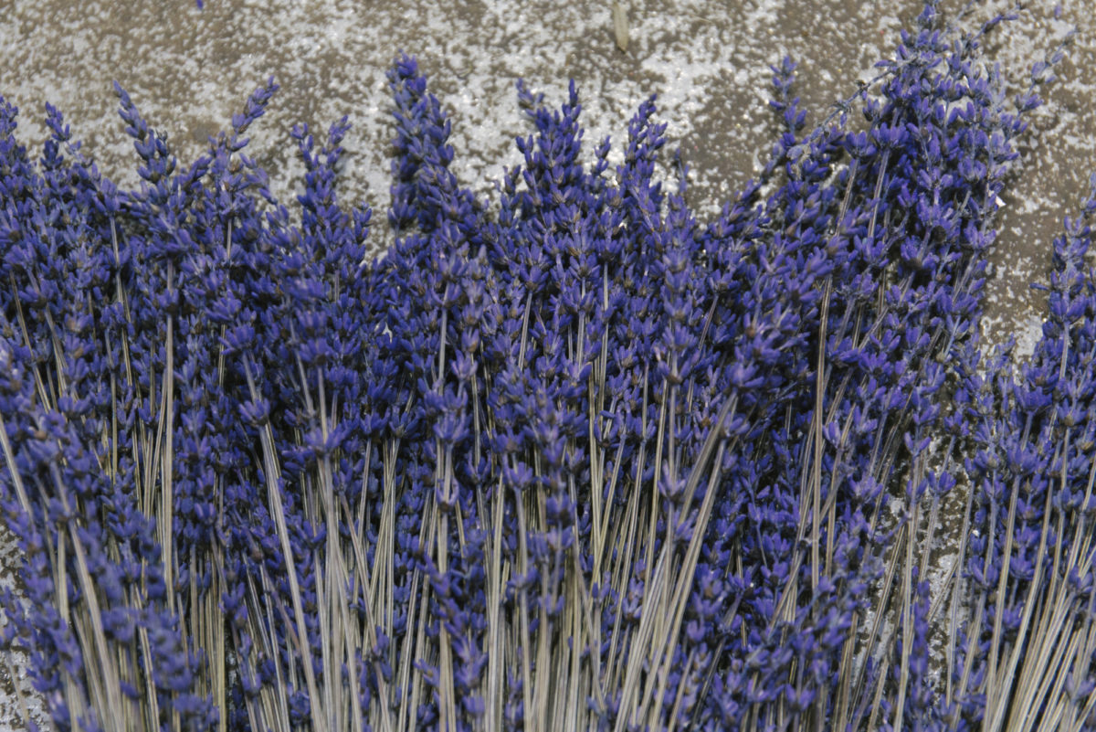 New Covent Garden Flower Market April 2019 A Florists Guide To Dried Flowers And Grasses Rona Wheeldon Flowerona Dried Lavender At Porters Foliage