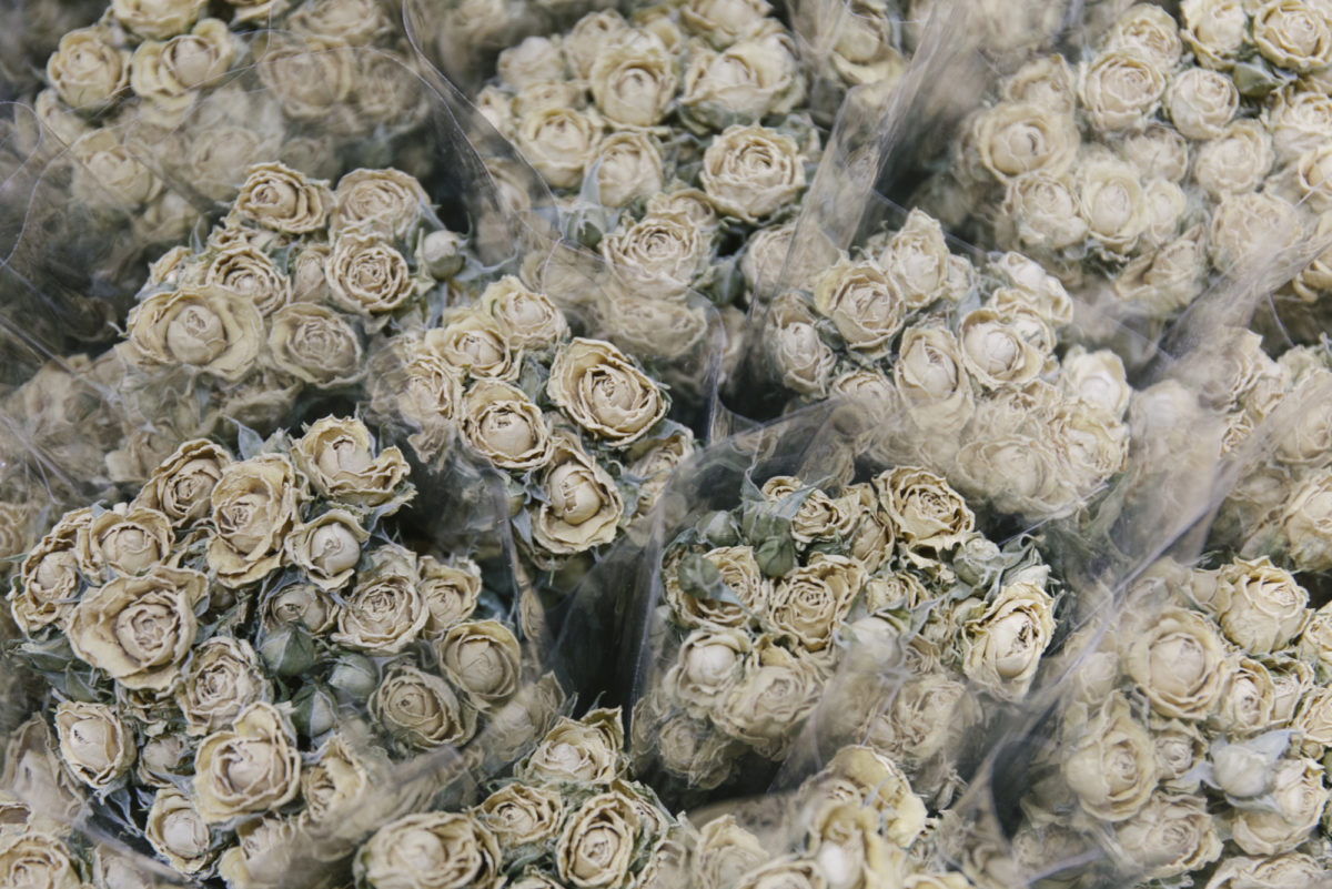 New Covent Garden Flower Market April 2019 A Florists Guide To Dried Flowers And Grasses Rona Wheeldon Flowerona Dried Natural Spray Roses At Porters Foliage