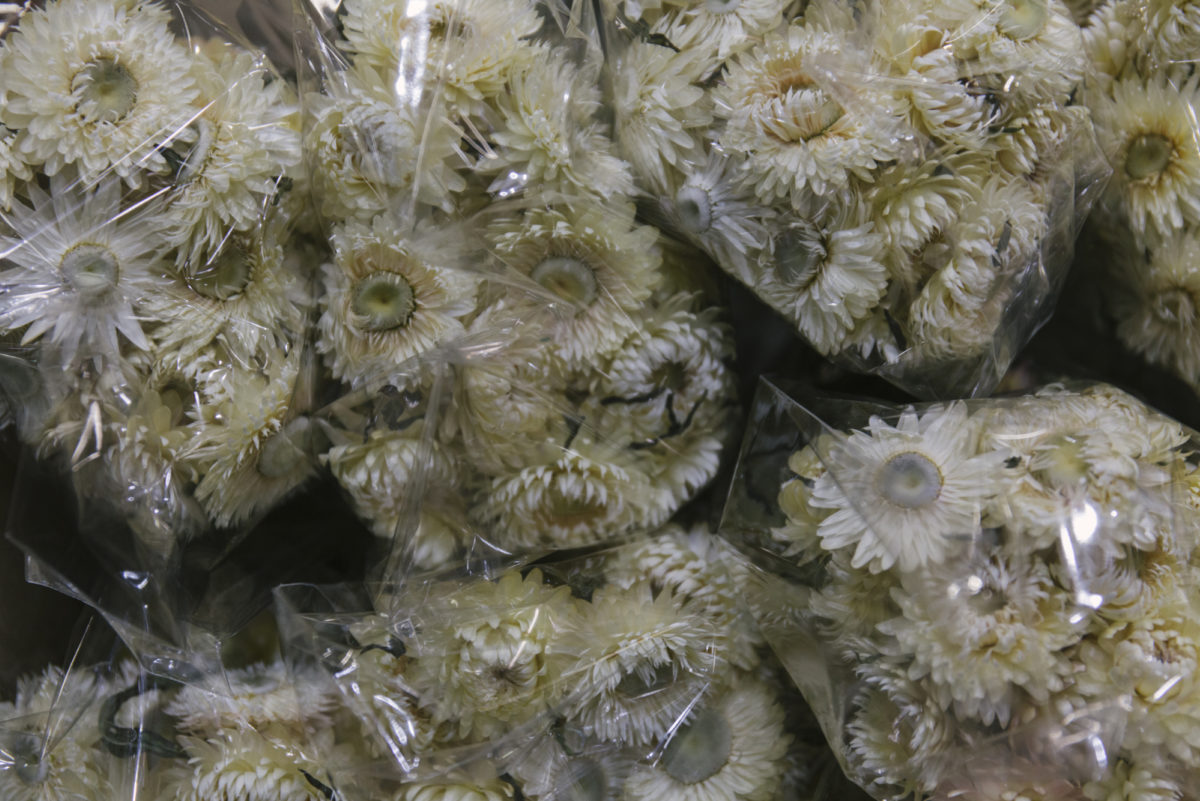 New Covent Garden Flower Market April 2019 A Florists Guide To Dried Flowers And Grasses Rona Wheeldon Flowerona Dried White Helichrysum At Porters Foliage Hero Image