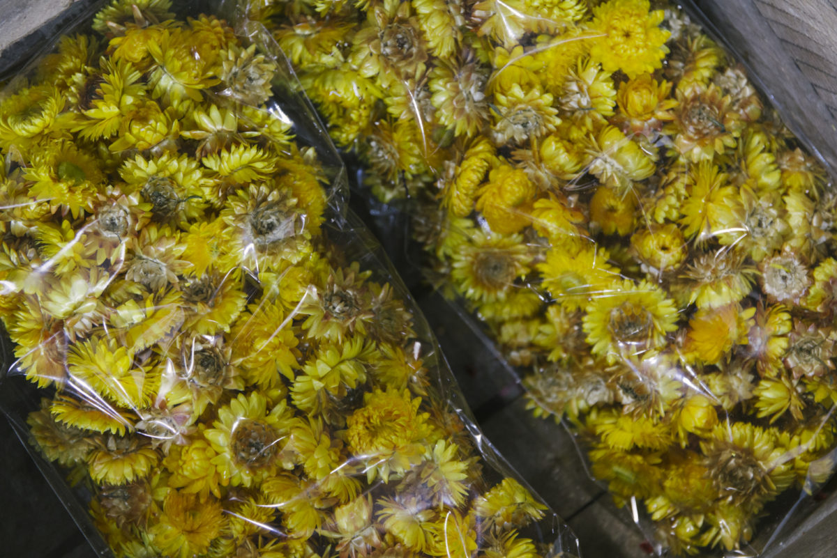 New Covent Garden Flower Market April 2019 A Florists Guide To Dried Flowers And Grasses Rona Wheeldon Flowerona Dried Yellow Helichrysum Flower Heads At Porters Foliag