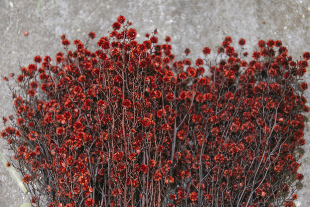 New Covent Garden Flower Market April 2019 A Florists Guide To Dried Flowers And Grasses Rona Wheeldon Flowerona Dyed Red Stirlingia At Porters Foliage
