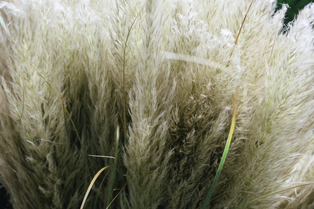 New Covent Garden Flower Market April 2019 A Florists Guide To Dried Flowers And Grasses Rona Wheeldon Flowerona Pampas Grass At Porters Foliage 21