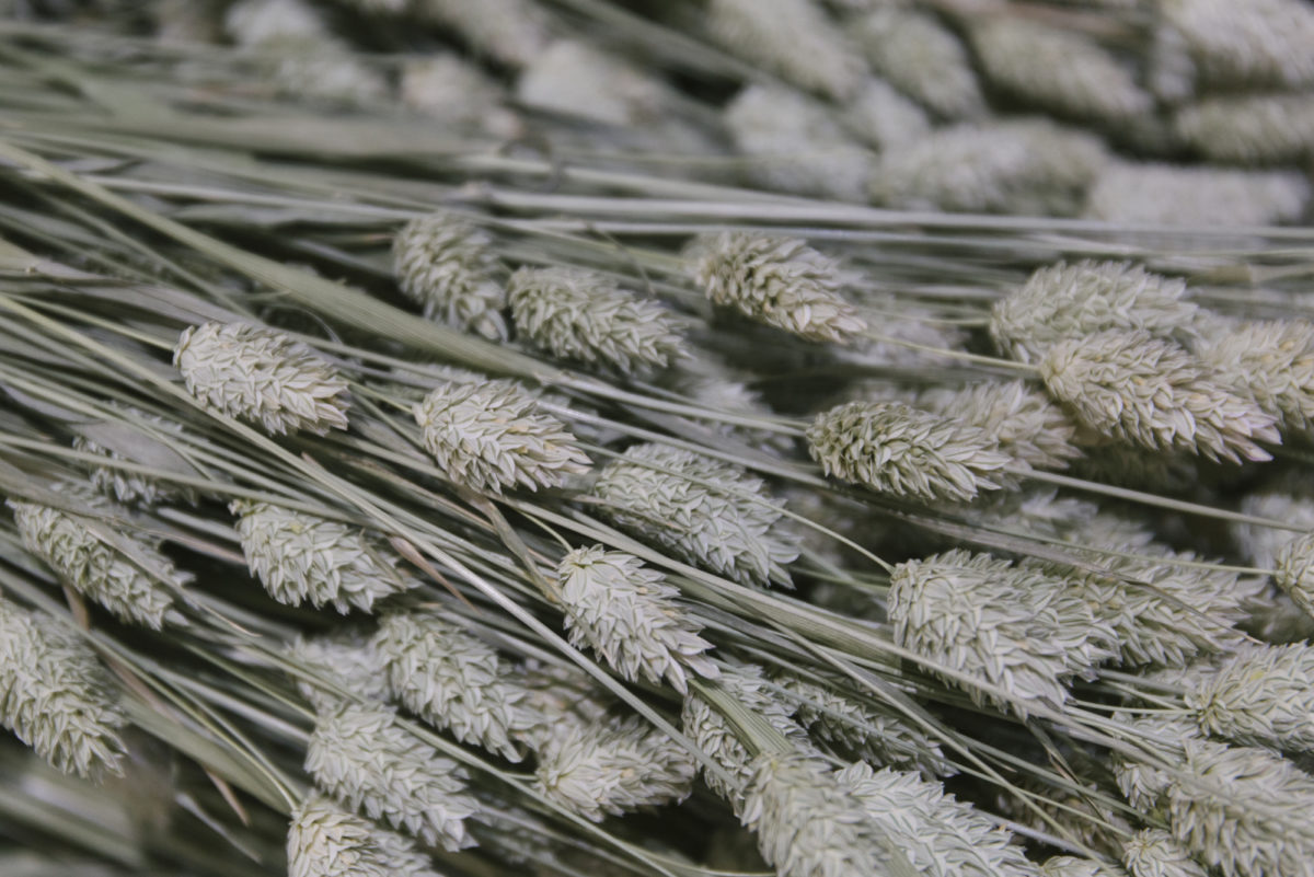 New Covent Garden Flower Market April 2019 A Florists Guide To Dried Flowers And Grasses Rona Wheeldon Flowerona Phalaris At Porters Foliage
