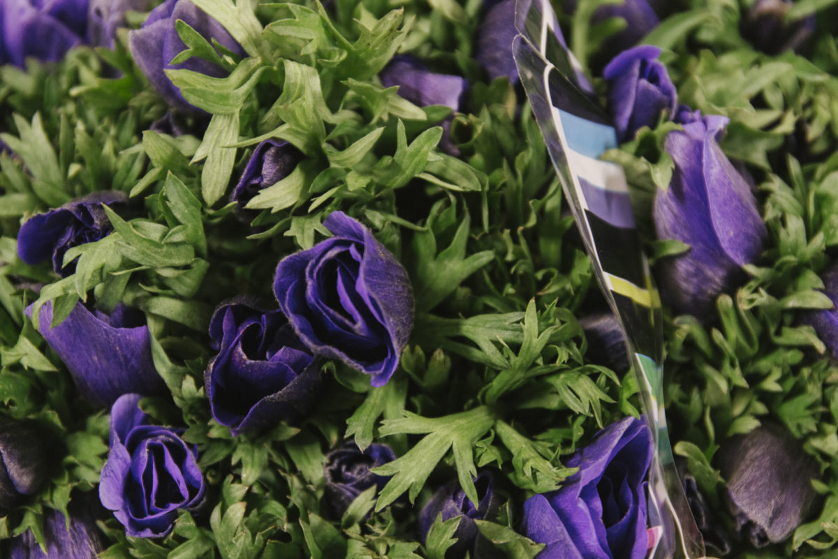 New Covent Garden Flower Market February 2019 A Florists Guide To Anemones Rona Wheeldon Flowerona Anemones Galil Blue At Dennis Edwards Flowers